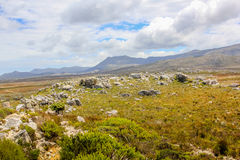 非洲山南表 免版税图库摄影