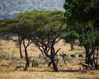 非洲平原 库存照片