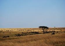 非洲平原 图库摄影