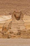 非洲开罗埃及吉萨棉极大的狮身人面象 免版税图库摄影