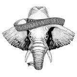 非洲或印度象野生动物佩带的阔边帽墨西哥节日墨西哥党例证狂放的西部 免版税图库摄影