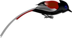 非洲捕蝇器天堂 免版税库存照片