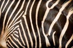 非洲斑马的皮肤的自然纹理 免版税库存照片