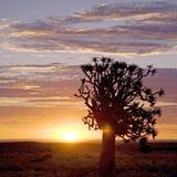 非洲日出 免版税库存图片