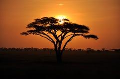 非洲日出 免版税图库摄影