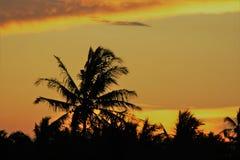 非洲日落棕榈桑给巴尔 免版税库存照片