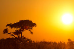 非洲日落 免版税图库摄影