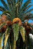 非洲枣椰子结构树突尼斯 库存图片