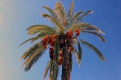 非洲枣椰子结构树突尼斯 免版税库存图片