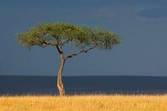 非洲横向 免版税库存照片