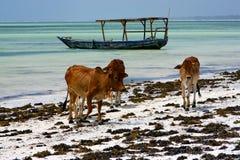 非洲母牛蓝色盐水湖放松zanziba的海岸线小船 免版税库存照片