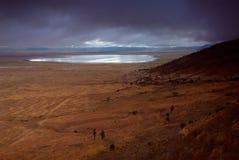 000 25 180非洲沿大动物区阿鲁沙保护火山口密度遗产最高的高地km横向主要近似居住掠食性动物驰名选址位于的坦桑尼亚科教文组织有蹄类动物西方世界的哺乳动物的ngorongoro人口 免版税库存图片