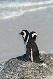 非洲海滩冰砾企鹅 免版税库存照片
