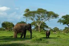 非洲1的精神 免版税图库摄影