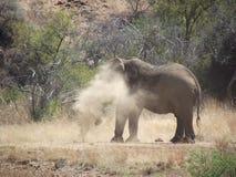 非洲著名kanonkop山临近美丽如画的南春天葡萄园 免版税图库摄影