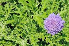 非洲蒿木植物和花 库存图片