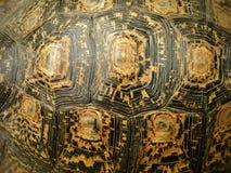 非洲被激励的草龟壳 库存照片