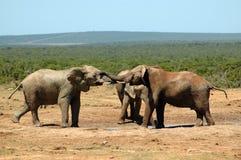 非洲野生生物 图库摄影