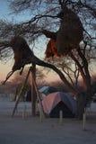 非洲野营 免版税库存图片