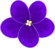 非洲非洲堇紫罗兰 库存图片