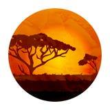 非洲风景、金合欢剪影和日落 免版税库存图片