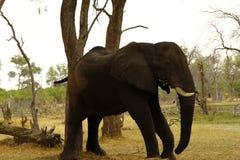 非洲高光 库存图片