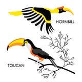 非洲鸟1 库存图片