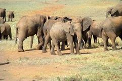 非洲,动物学 库存图片