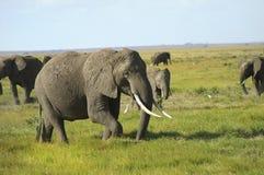 非洲,动物学 图库摄影