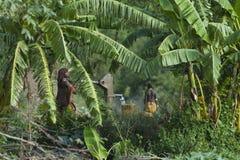 非洲,南埃塞俄比亚,哈马尔部落 免版税图库摄影