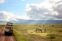 非洲,坦桑尼亚, Ngorongoro火山口- 2016年3月:吉普徒步旅行队 免版税库存照片