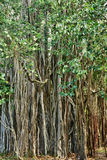 非洲, Mont Choisy美丽如画的区域在毛里求斯 库存图片