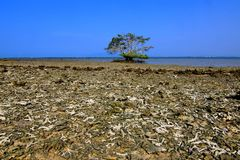 靠岸与单独残破的珊瑚和树在Pulau Gede, Rembang,印度尼西亚 库存图片