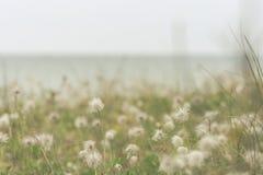 靠岸与草在多云天气的一个雨天 免版税库存照片