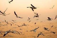 靠岸与飞行在天空的海鸥在日落 免版税库存图片