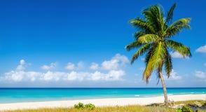 靠岸与高棕榈树,加勒比岛 免版税库存图片