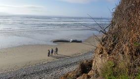 靠岸的鲸鱼1 库存图片