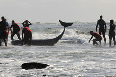 靠岸的kommetjie鲸鱼