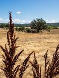 靠码头与一个干草领域和山峰的种子 免版税库存图片