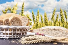 面包切的和在桌上的麦子耳朵在小麦金黄领域背景中用成熟麦子在明亮的晴天 免版税图库摄影