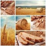 面包和收获麦子 图库摄影