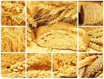 面包和谷物 库存图片