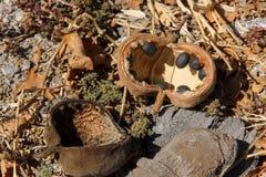 猴面包树在地面上和种子下落的水果树 免版税库存图片