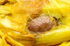 面包树果详述与种子 库存照片