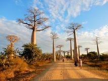 猴面包树的大道,小组排行土路的猴面包树树在西马达加斯加 免版税图库摄影