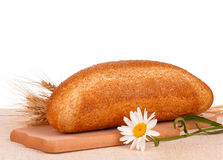 面包用麸皮 库存照片