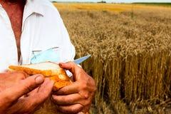 面包的时刻 免版税库存照片