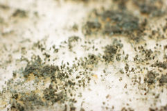 面包真菌 库存图片