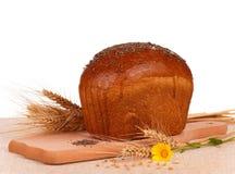 面包隔离黑麦白色 库存照片