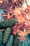 负面因素和槭树叶子 库存照片